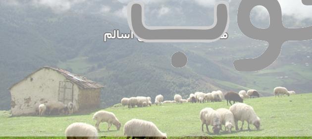 khalkhal-asalem-forest-iran-031