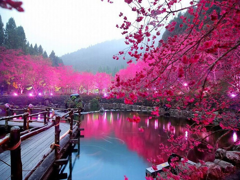 Cherry-Blossom-Lake-Sakura-Japan-beautiful-Pictures-Attractive-Places-to-Visit-Japan-Images-Wallpapers-Photos