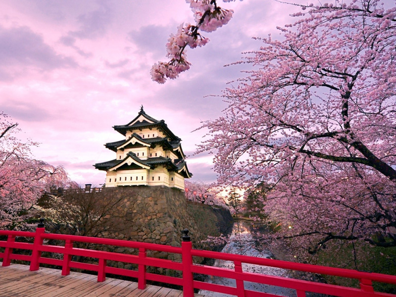 japan_cherry_blossoms_blossoms_temples_japanese_bridge_1920x1080_wallpaper_Wallpaper_1920x1200_www.wallpaperswa.com-3
