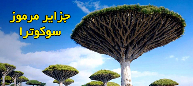 Socotra-Island