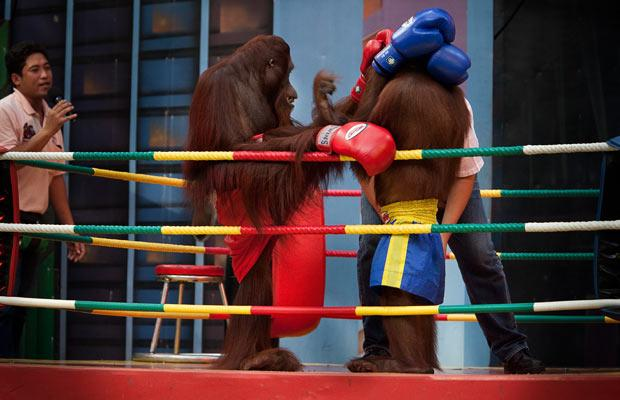 boxing_1612769i