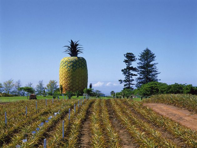 53e2ebbfdddaa35c30f648d8_wacky-attractions-big-pineapple