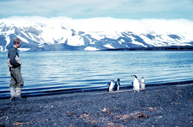 Penguins_on_deception_island_1962