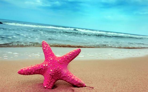 Starfish-On-The-Beach
