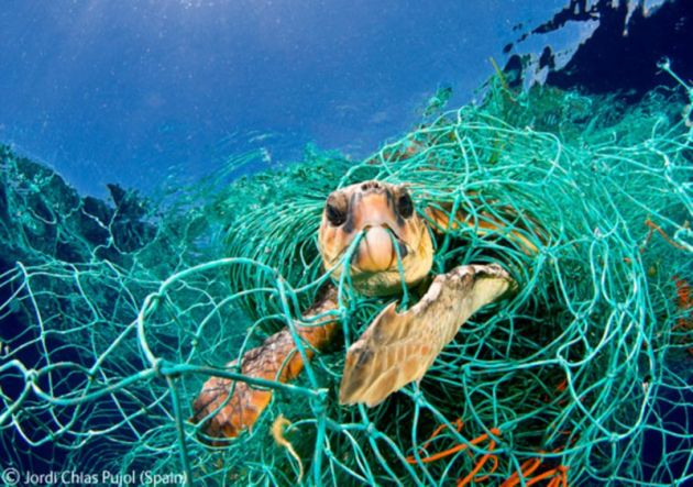 sea-turtle-caught-in-fishing-net