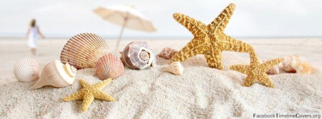 seashells-and-starfish-on-beach