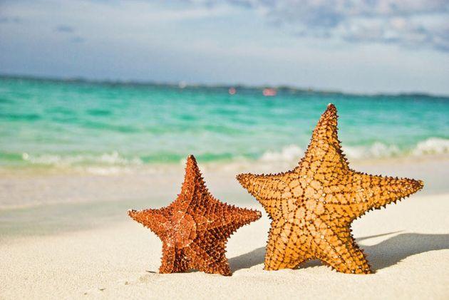 starfish-on-tropical-caribbean-beach-mehmed-zelkovic