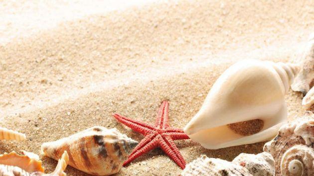 starfish-shells-beach-hd-download
