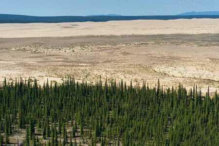 کویر-در-وسط-جنگل-های-سردسیر-آلاسکاتصاویر-1
