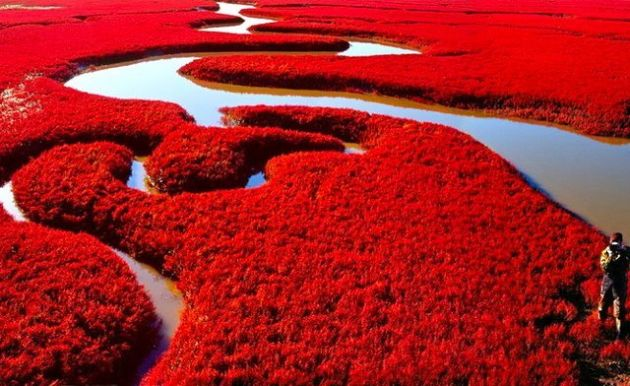 Red-colored-Beach-in-China