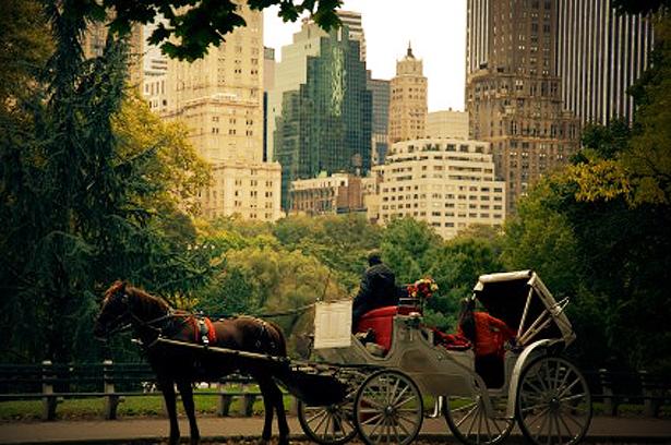 central_park_nyc_hourses