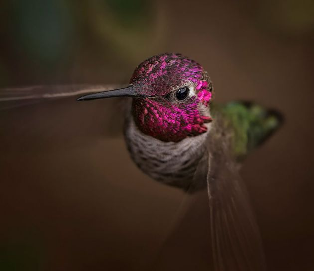 cute-beautiful-hummingbird-photography-10