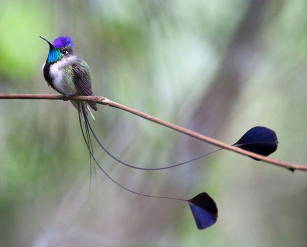 cute-beautiful-hummingbird-photography-3