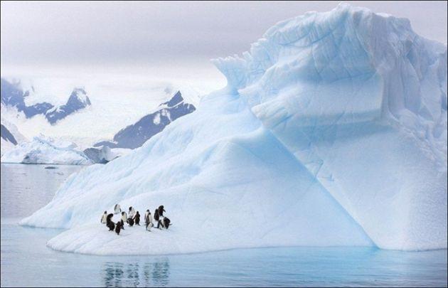 آنتارکتیکا (1)
