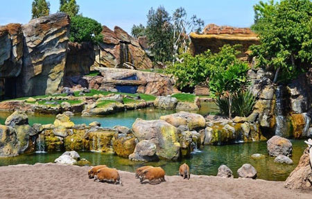 باغ وحش1