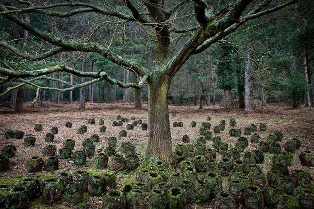 جنگل های انگلستان (1)