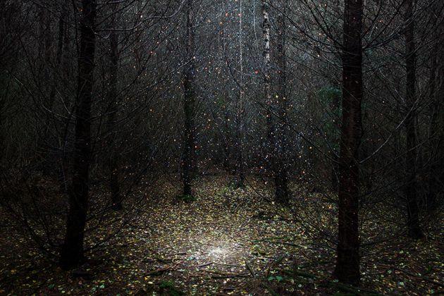 جنگل های انگلستان (10)