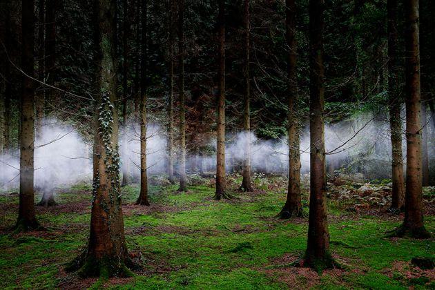 جنگل های انگلستان (11)