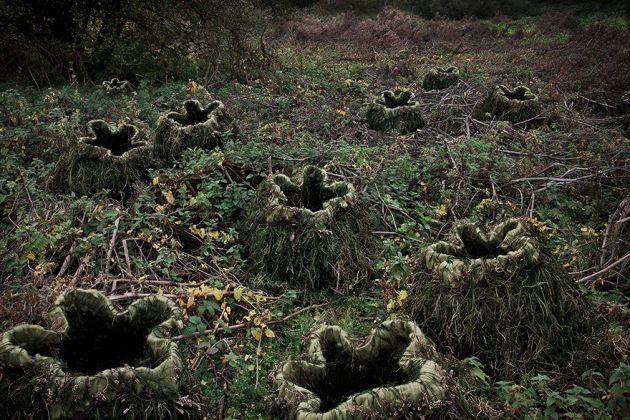 جنگل های انگلستان (12)
