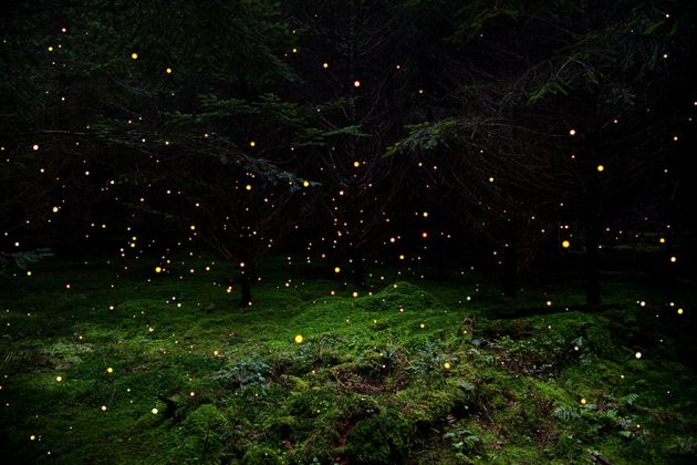 جنگل های انگلستان (13)