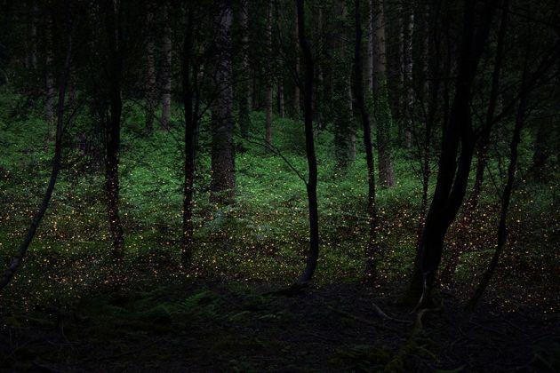 جنگل های انگلستان (15)