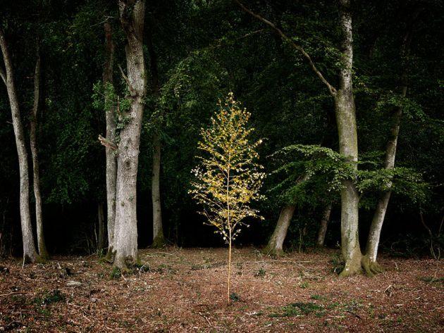جنگل های انگلستان (16)