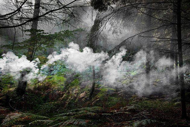 جنگل های انگلستان (17)
