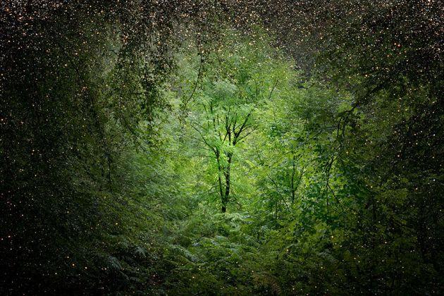 جنگل های انگلستان (20)