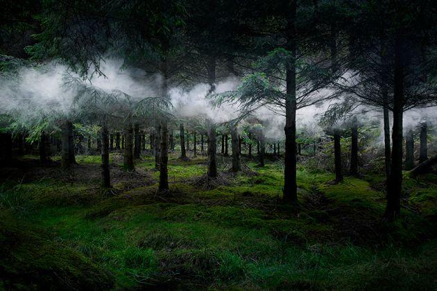 جنگل های انگلستان (21)