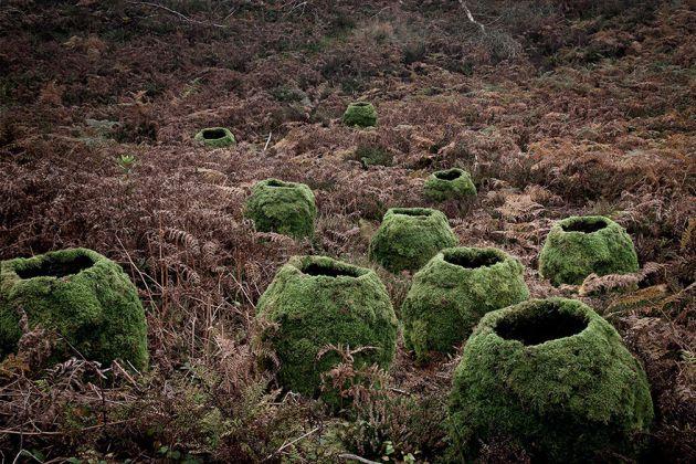 جنگل های انگلستان (22)