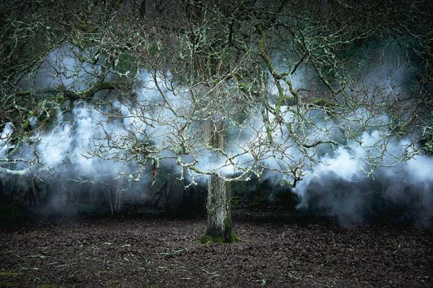 جنگل های انگلستان (3)