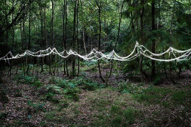 جنگل های انگلستان (4)