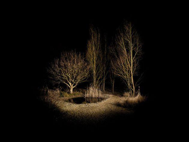 جنگل های انگلستان (5)