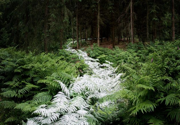 جنگل های انگلستان (9)