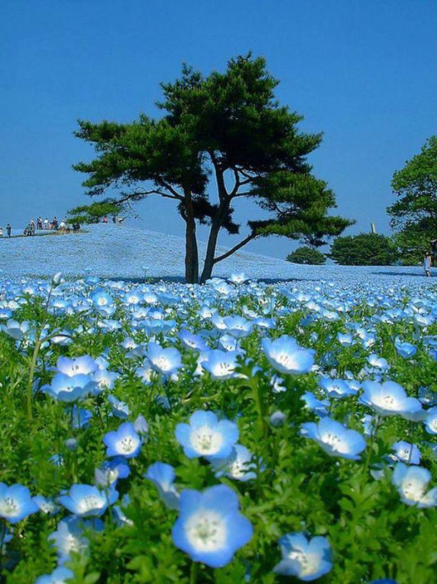 طبیعت آبی (14)