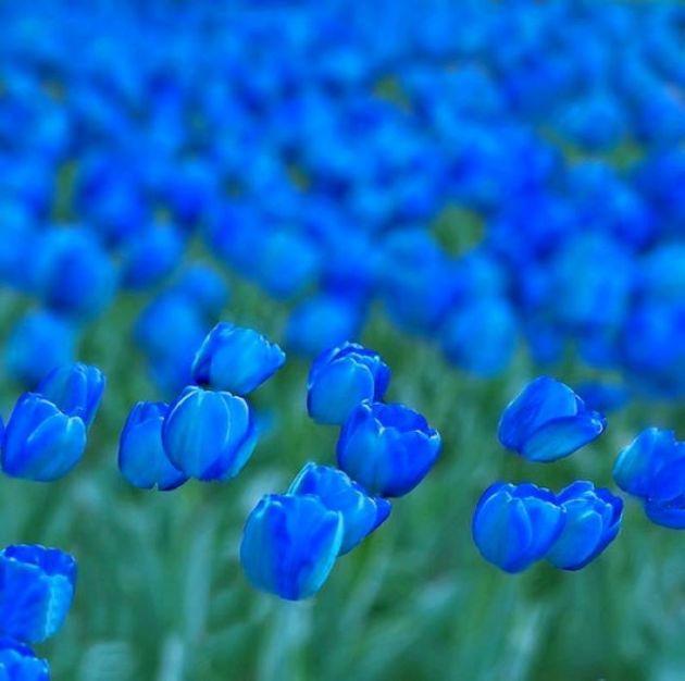 طبیعت آبی (15)