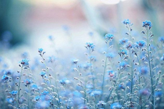 طبیعت آبی (19)