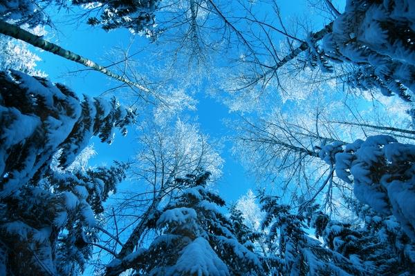 طبیعت آبی (9)