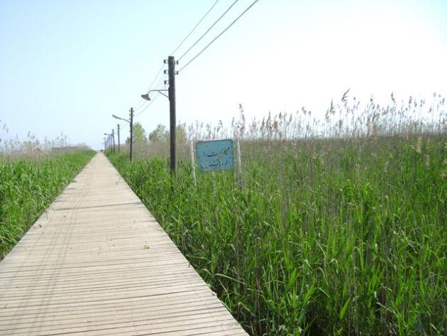 پل چوبی کیاشهر (1)
