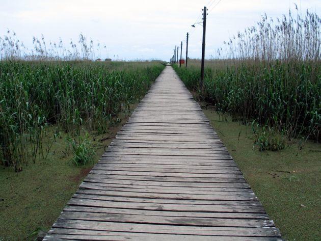 پل چوبی کیاشهر (6)