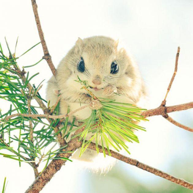 1cute-animals-hokkaido-ezo-japan-3