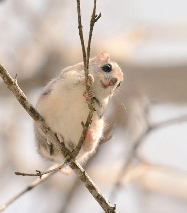 1cute-animals-hokkaido-ezo-japan-4