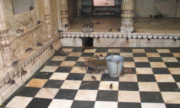 Karni-Mata-Temple-India