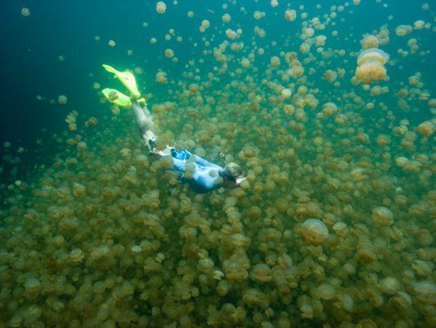 Palau-JelleyfishLake-Daira__M0013475