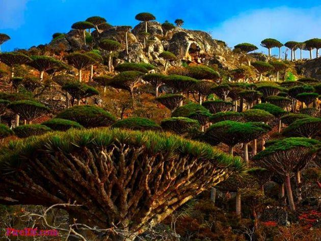 Socotra-Island--Yemen