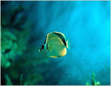aquarium_kish10