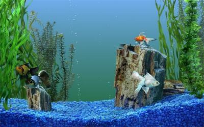 aquarium_kish4