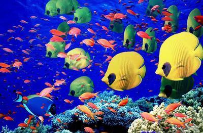 aquarium_kish_2