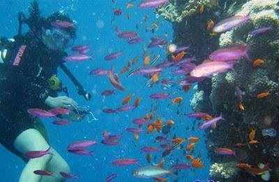 aquarium_kish_3
