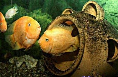 aquarium_kish_4